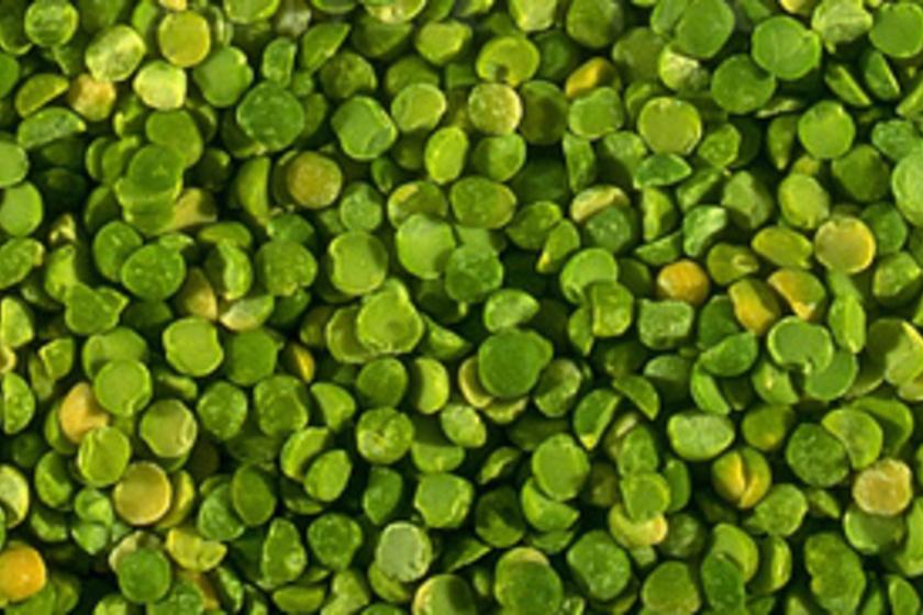 Zsírégetés a Zöldek Erejével