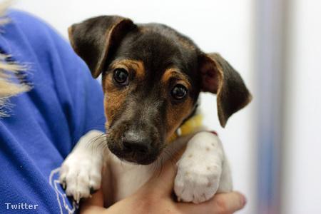 A kutya depresszió okai, tünetei és kezelése