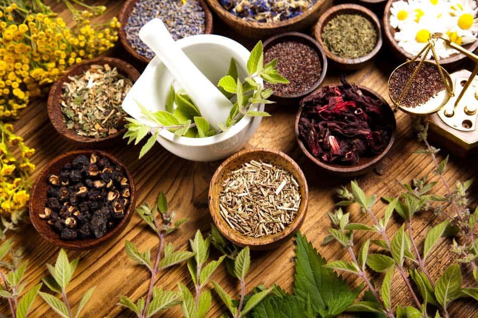 fogyni való gyógynövények