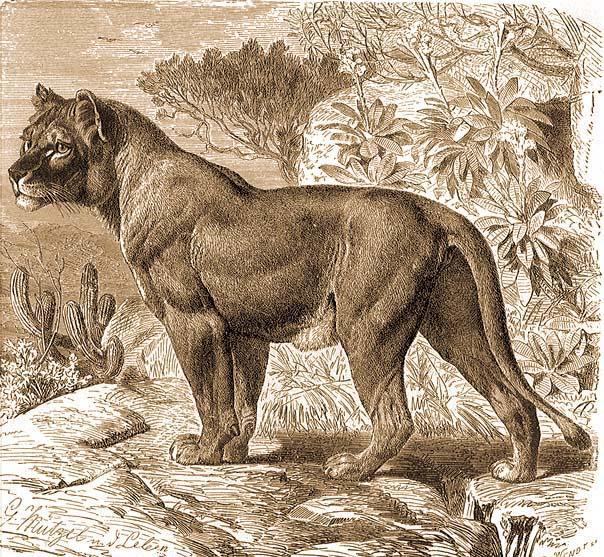 Leopárdgekkó – Wikipédia